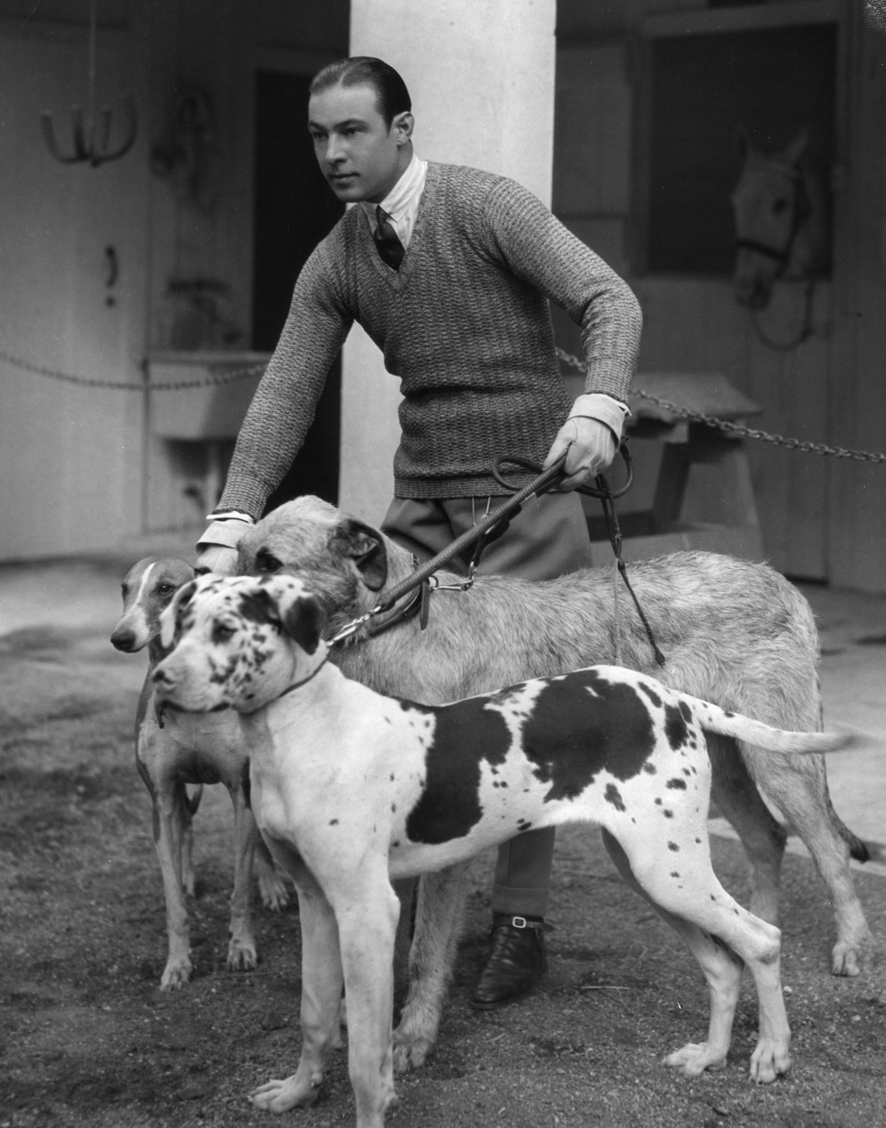 """Rudolph Valentino and his dogs. Original caption reads, """"Rudolph Valentino has his hands full when he takes three of his favorite dogs for a mornings (sic) walk in the mountains surrounding his new estate in Beverley Hills, California. Left to right the dogs are: Mirtza, an Arabian greyhound, Centaur Pendragon, his Irish wolf-hound, and Shaitan, the great Dane pup. Mirtza and Centaur Pendragon make their screen debut with their master in 'Son of the Sheik' the new Valentino opus for United Artists"""""""